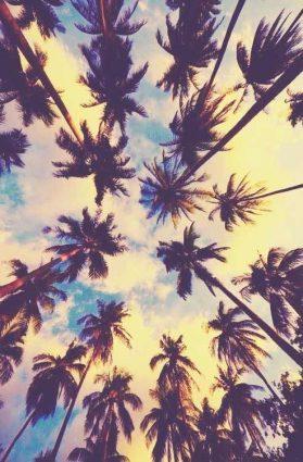 Coconut Trees - The Summer Edit - I Love Desigenr London - East Meets West Luxury Portal
